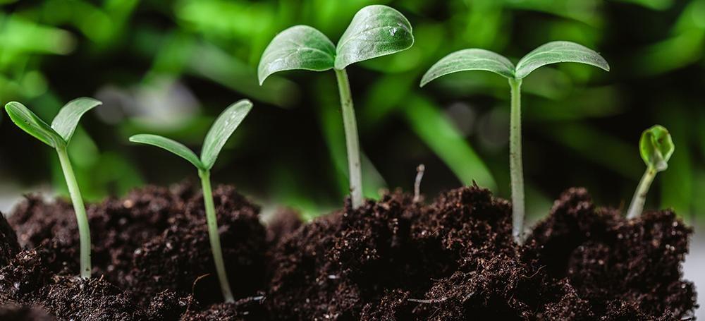 seed calibration